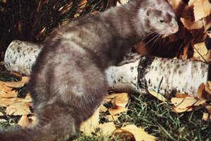 Staną pod olsztyńskim ratuszem w obronie zwierząt