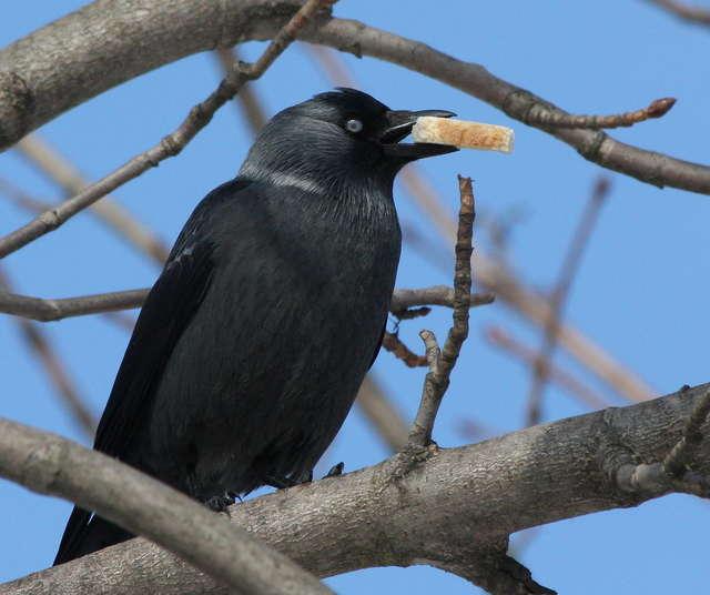 Czy zimą dokarmiać ptaki w miastach? - full image