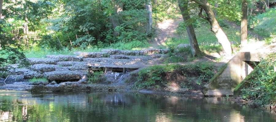 Łyna w Lesie Miejskim w Olsztynie