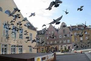 Na pohybel gołębiom