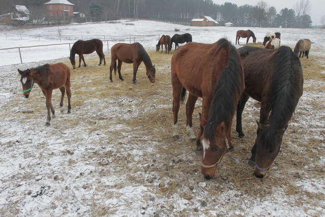 Pięćdziesiąt cztery konie uratowane dzięki makulaturze - full image