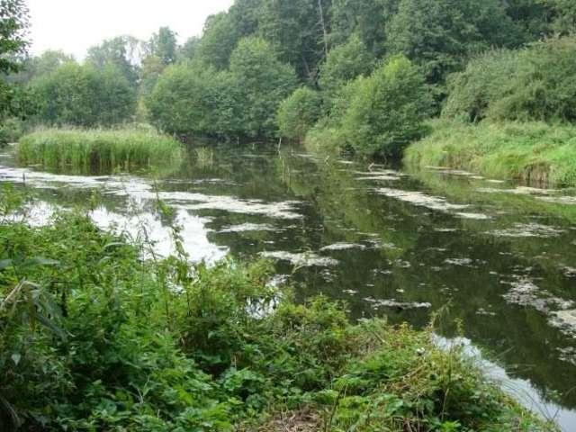 Rezerwat Borki większy o 200 hektarów  - full image