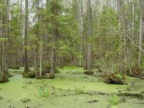Rezerwat przyrody Borki