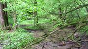 Rezerwat przyrody Jar Brynicy i Jar Brynicy II