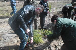 Dzieciaki, Iwona Pavlović i Norbi las sadzili