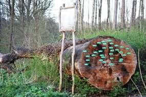 "Ścieżka dydaktyczna  ""Ruciański las"