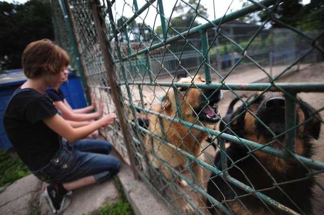 Szczekanie psów znajdujących się w schronisku przeszkadza okolicznym mieszkańcom - full image