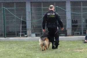 Przeszkolone psy szukają zaginionych w okolicach Olsztyna