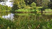 Rezerwat przyrody Boczki