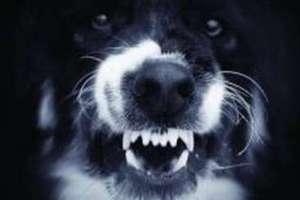 Pies pogryzł dwoje dzieci. Trafiły do szpitala