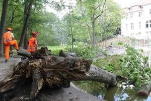 Olsztyńskie drzewa się przewracają. Trwa kontrola