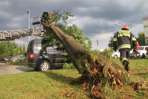 Krajobraz po burzy. Połamane drzewa, urwane konary