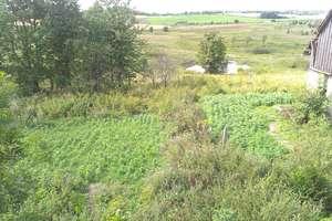 CBŚ zlikwidował 5 plantacji konopi indyjskich
