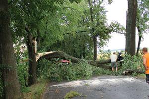 Kilkadziesiąt połamanych drzew. Wichura przeszła nad powiatem bartoszyckim.
