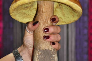 Taaakie prawe rosną w kownackich lasach