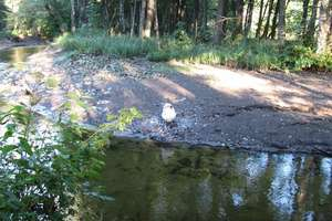 Uwaga kajakarze: rzeka Dadaj wyschła
