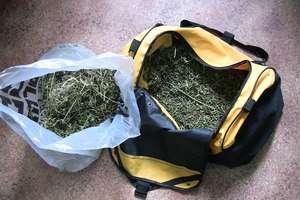 Zabezpieczyli ponad 1400 porcji marihuany