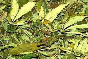 Marihuana i amfetamina u 29-latka