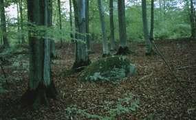 Rezerwat Bukowy