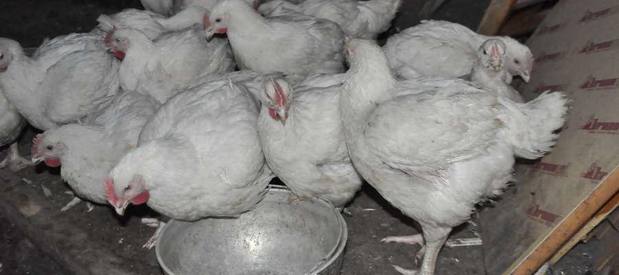 Do wniosku producent rolny musi dołączyć dokumentację określającą liczebność stada drobiu w gospodarstwie położonym na obszarze zapowietrzonym lub zagrożonym