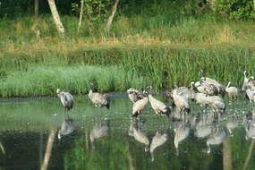 Rezerwat przyrody Jezioro Gaudy