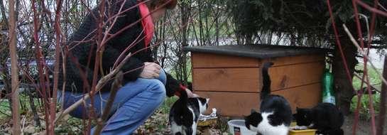 Kolejnych 20 domków dla wolno żyjących kotów trafiło właśnie do Elbląga
