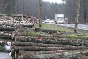 Tną lasy na potęgę?