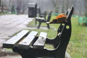 Wandale zniszczyli drzewa i ławki w parku Kusocińskiego