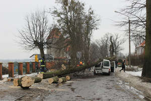 Ścinane drzewo przewróciło się na samochód