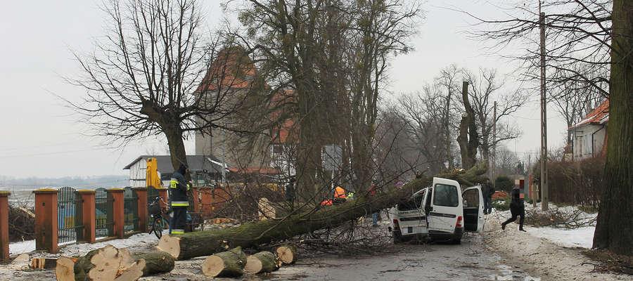 Wycinane przy ul. Kolejowej w Bisztynku drzewo zgniotło przejeżdżającego citroena.