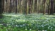 Dotknij wiosny osobiście - felieton Beaty Lenartowicz