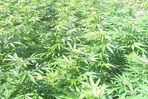 Biały proszek, nasiona, 40 gram marihuany i dwaj mężczyźni...