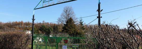 Rodzinny Ogród Działkowy im. Marii Curie-Skłodowskiej w Elblągu chce wyjść ze struktur PDZ