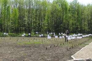 Żywy pomnik z 90 drzew