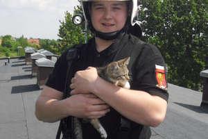 Strażacy zdjęli kociaka z wysokiego drzewa