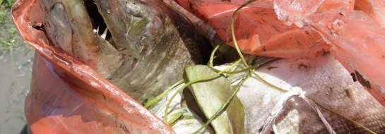 Rybacy mówią wprost: to największa katastrofa ekologiczna na jeziorze Druzno