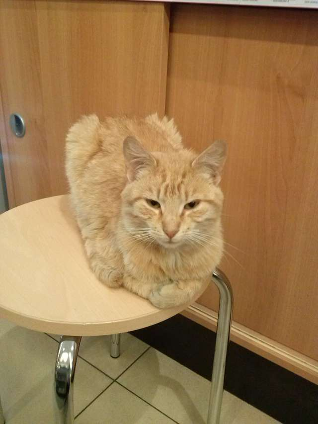 Właściciel szuka kota. Prosi o pomoc - full image