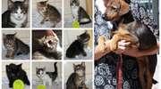 Zwierzęta szukają domu