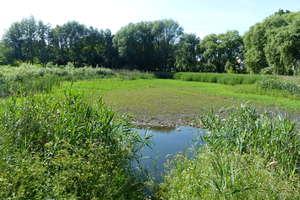 Z bagienka na Gajerku robi się łąka