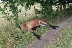 Koń zginął na krajowej 57