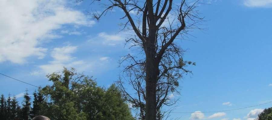 Jeśli nie chcą wycinać drzew, to niech chociaż przytną konary — mówi Ryszard Żurek
