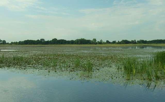Rezerwat przyrody Jezioro Drużno   - full image