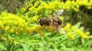 Odrażające nazwy pięknych muchówek