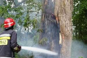 Pożar drzewa. Prawdopodobnie to celowe podpalenie