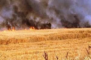 Spłonęło ponad 100 ha w gminie Pieniężno