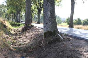 Masowa wycinka drzew: Może czas wziąć się za te przy drogach?