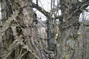 Korek koło Mrągowa