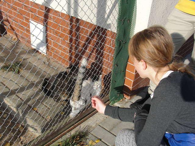 Na Dajtkach zebrali wyprawki dla bezdomnych zwierząt - full image