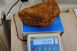 1,5 kg bursztynu za paskiem spodni