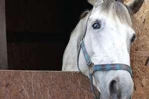 Sanatorium dla koni w Siemianach pilnie potrzebuje pomocy